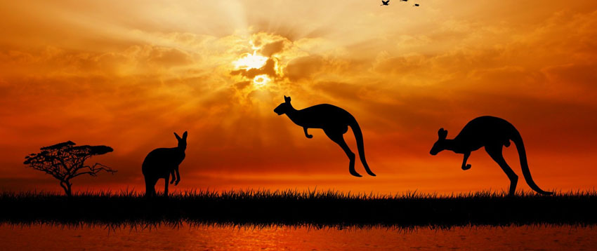 kangaroos-at-sunset